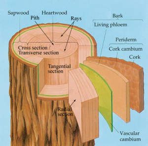 Tree Section